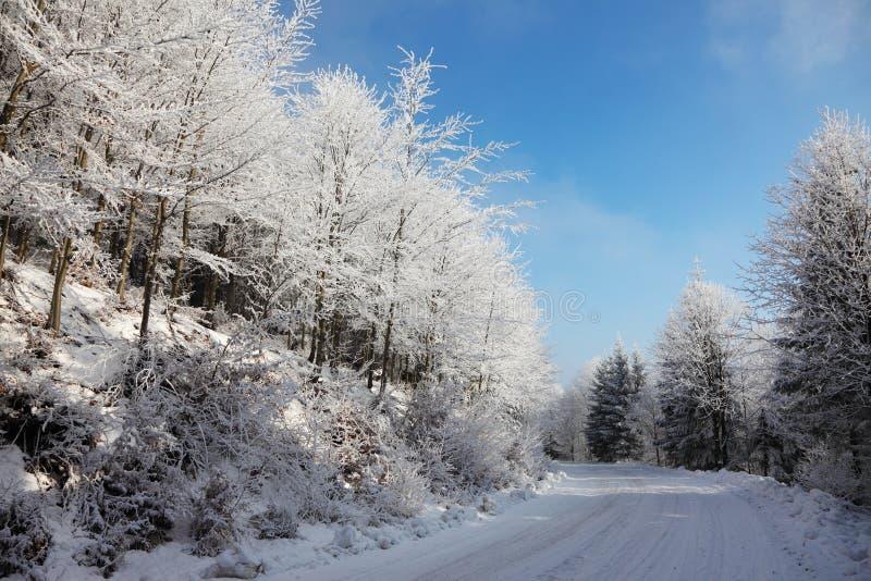 Foresta di inverno dello Snowy immagine stock libera da diritti