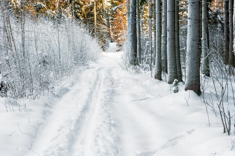 Foresta di inverno a dicembre, alberi coperti di neve fotografia stock