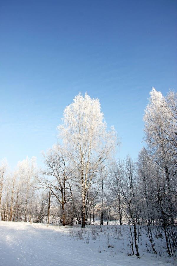 Foresta di inverno nella neve contro il cielo blu immagine stock libera da diritti