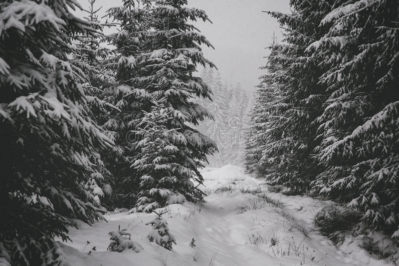 Foresta di inverno in neve Paesaggio della montagna con un sentiero per pedoni Giorno soleggiato e tempo gelido fotografie stock libere da diritti