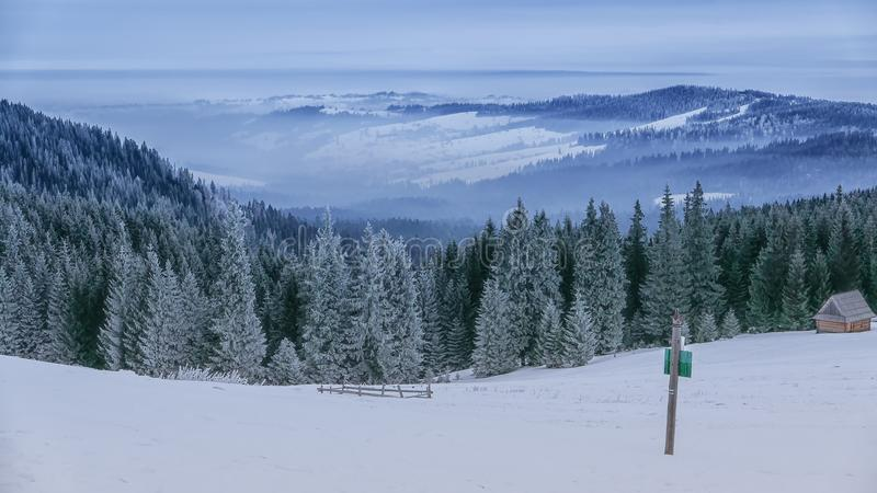Foresta di inverno, Rusinowa Polana, alto Tatras, Polonia fotografie stock libere da diritti