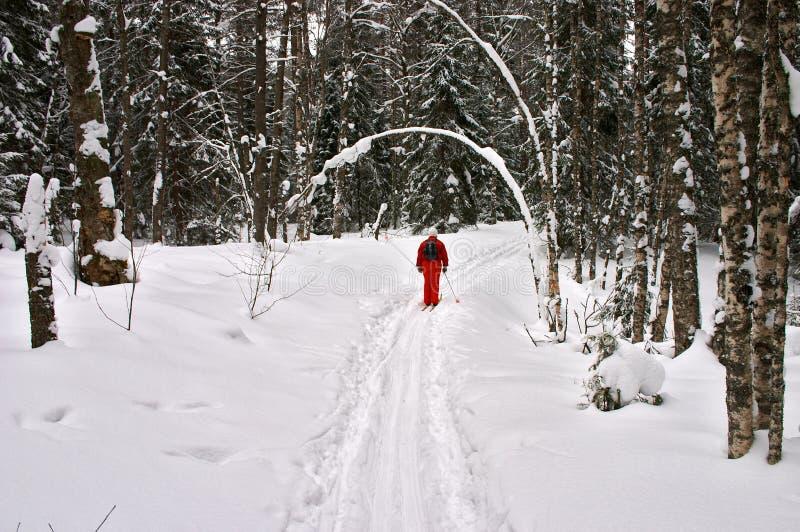 Foresta di inverno. Sciatore rosso fotografie stock