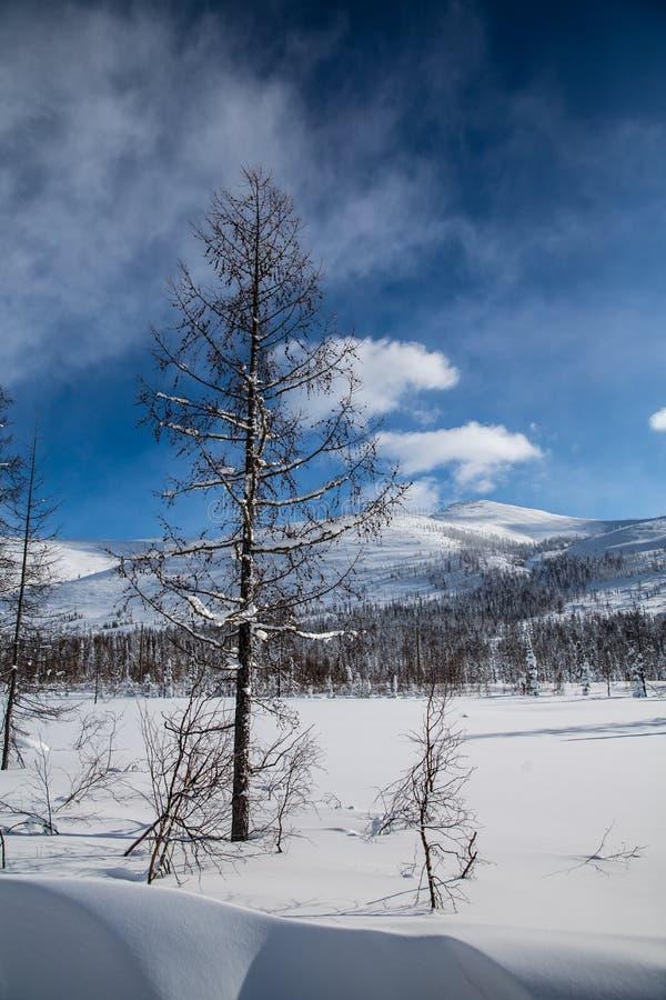 Foresta di inverno in tempo soleggiato contro un cielo blu fotografia stock