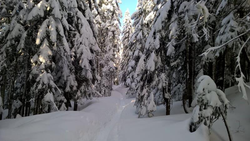 Foresta di inverno a Washington fotografia stock libera da diritti