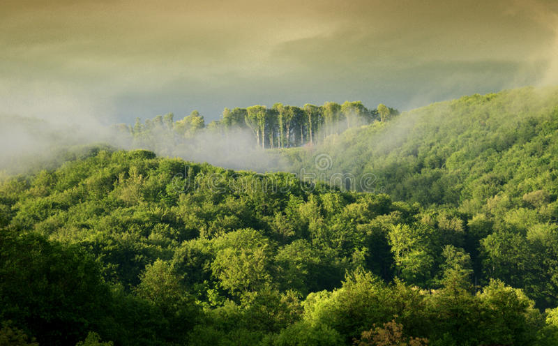 Foresta di mattina fotografie stock