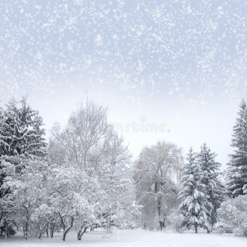 Foresta di natale bianco con neve immagini stock
