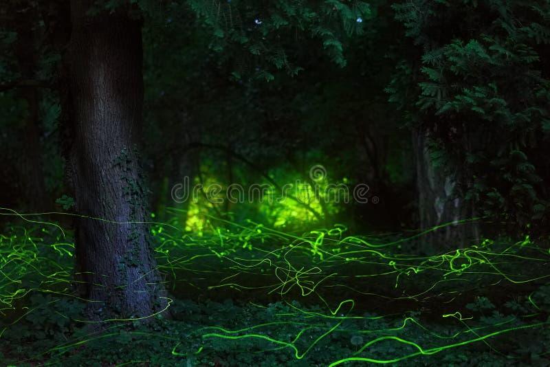 Foresta di notte delle lucciole di scena di favola immagine stock