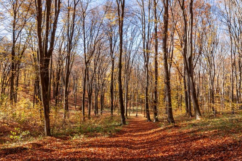 Foresta di Outum nel giorno soleggiato immagine stock libera da diritti