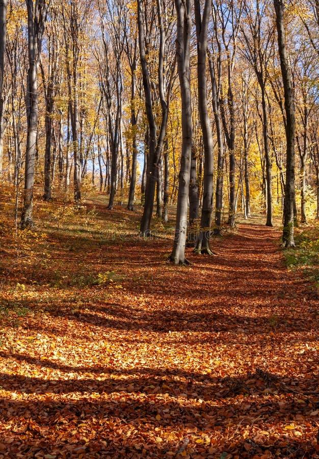Foresta di Outum nel giorno soleggiato immagini stock libere da diritti