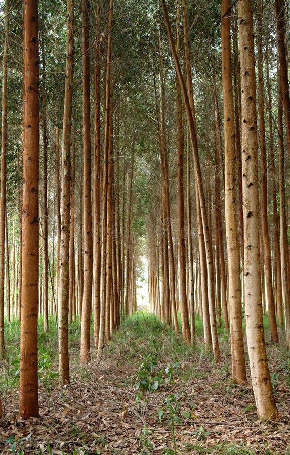 Foresta di Oxapampa nel Perù fotografia stock