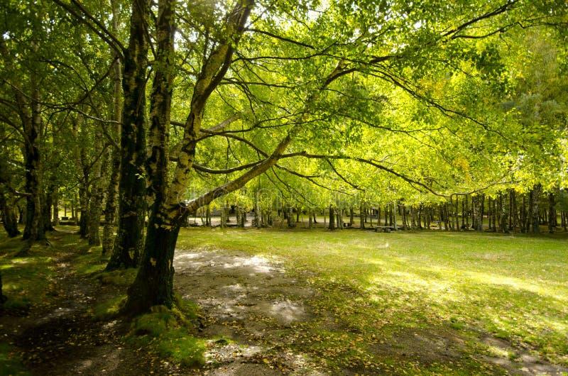Foresta di paradiso immagini stock
