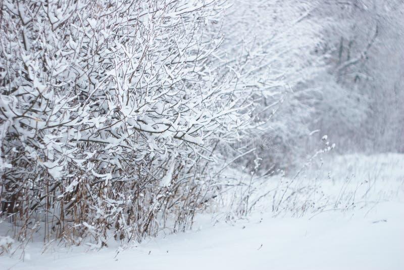 Foresta di Snowy immagini stock libere da diritti