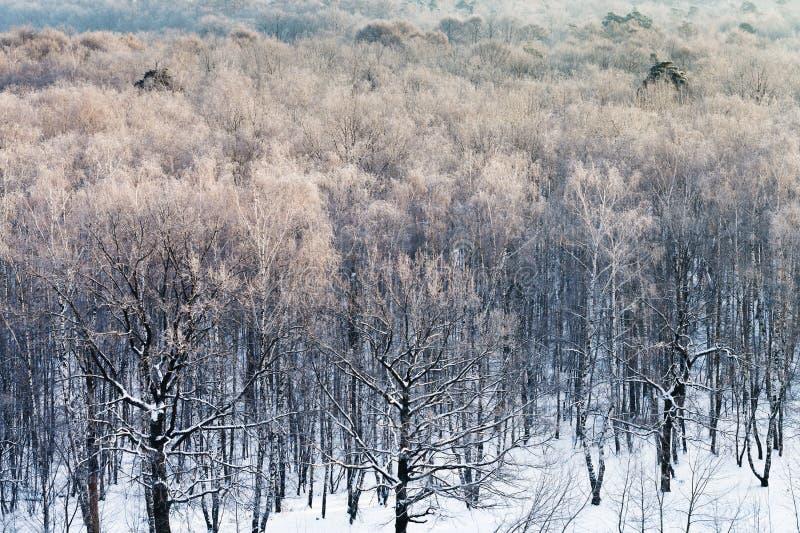 Foresta di Snowy nella mattina fredda di inverno fotografie stock libere da diritti