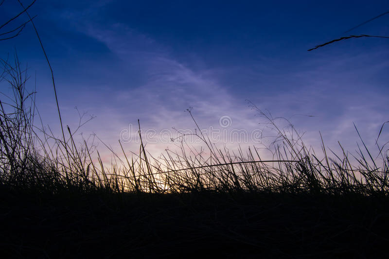 Foresta di tramonto immagine stock libera da diritti