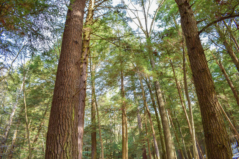 foresta di Vecchio-crescita fotografie stock
