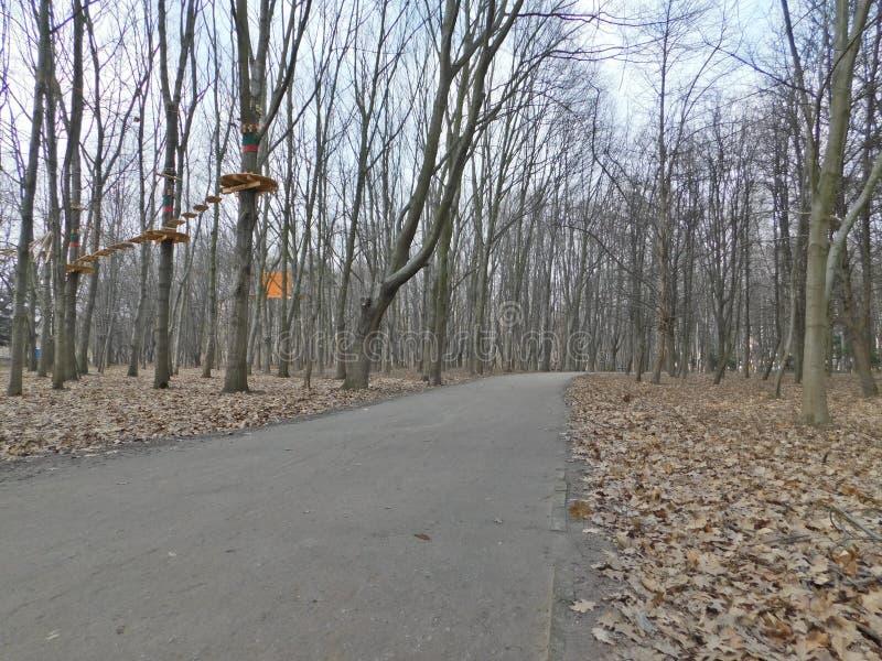Foresta di Vinnitsa immagini stock libere da diritti