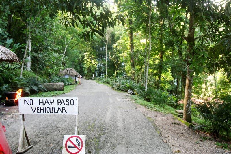 Foresta di Yaxchilan - Messico fotografia stock