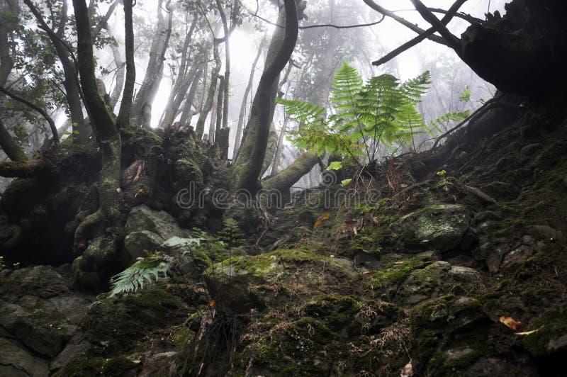 Foresta di Zarza della La fotografia stock libera da diritti