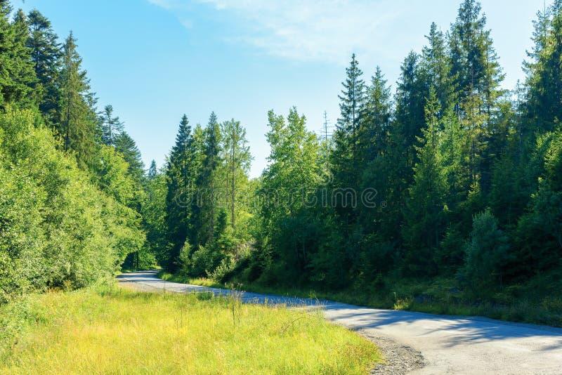 Foresta diretta in salita del paese della serpentina immagini stock libere da diritti