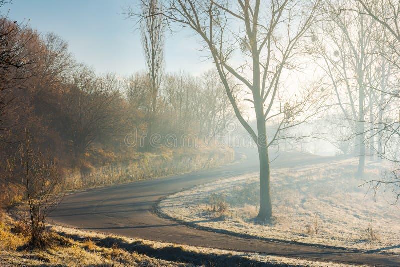 Foresta diretta in salita tortuosa in foschia di mattina fotografia stock libera da diritti