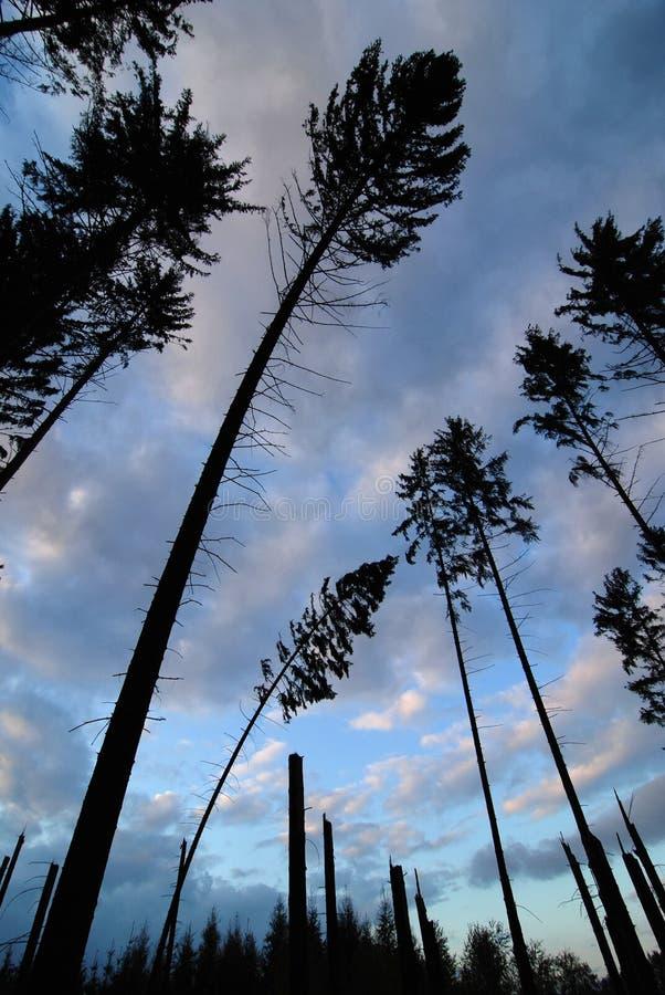 Foresta dopo la tempesta fotografia stock