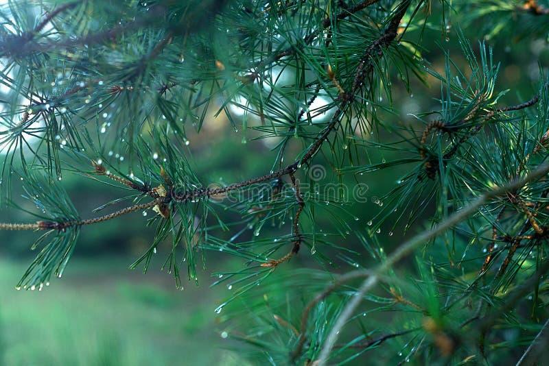 Foresta dopo pioggia  fotografie stock libere da diritti