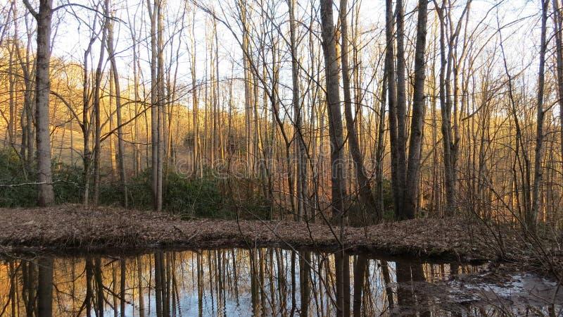 Foresta dorata immagini stock