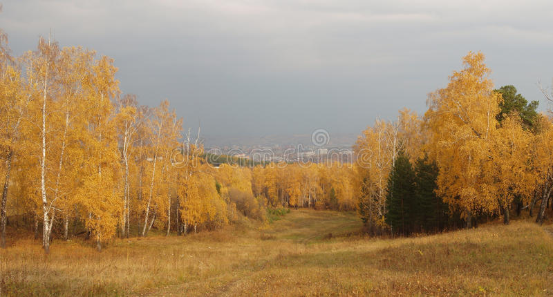 Foresta dorata fotografie stock libere da diritti