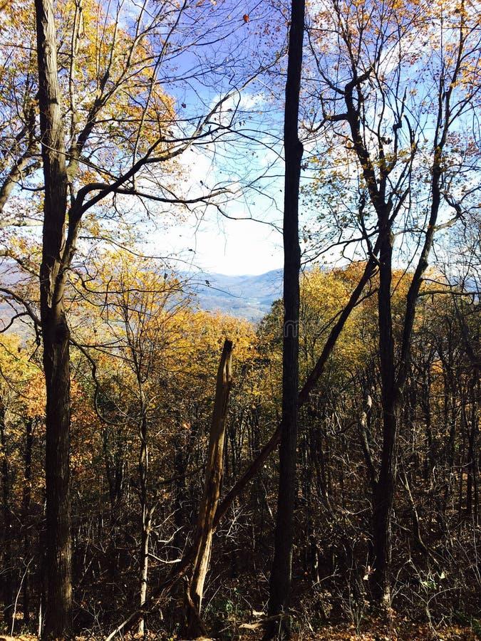 Foresta dorata con la vista immagini stock