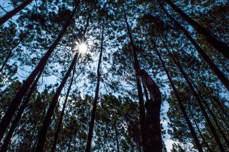 Foresta e cielo blu fotografia stock libera da diritti