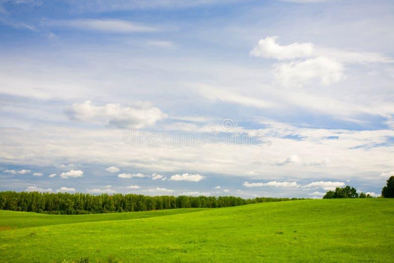 Foresta e cielo blu verdi fotografia stock libera da diritti