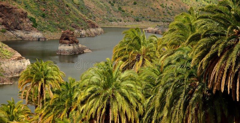 Foresta e diga della palma con roccia interna immagine stock