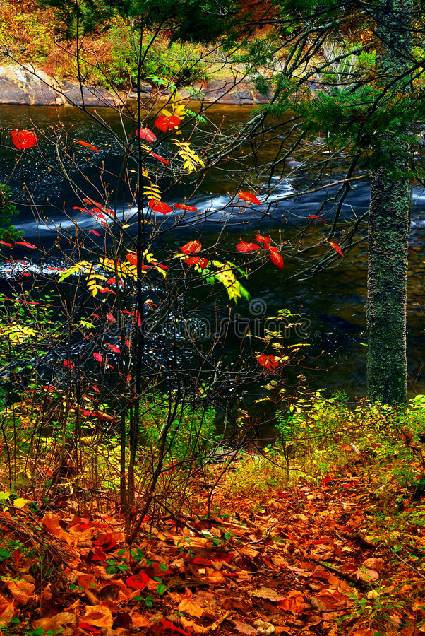 Foresta e fiume di caduta immagine stock libera da diritti