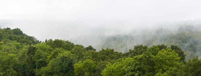 Foresta e foschia verdi immagine stock