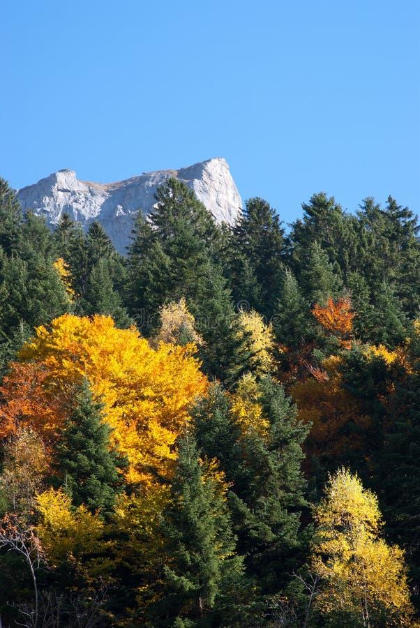 Foresta e montagne di autunno immagini stock