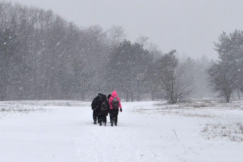 Foresta e neve pesante immagini stock libere da diritti
