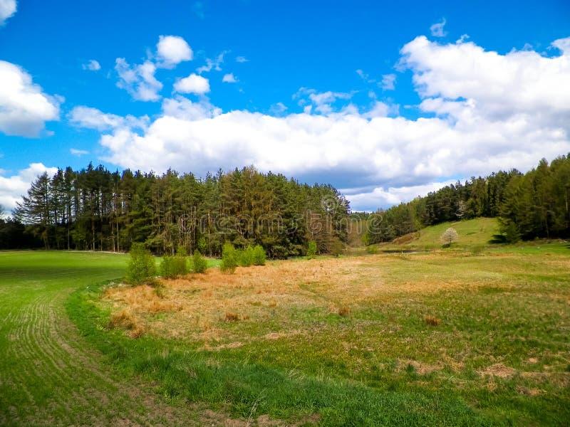 Foresta e prati - bellezza di Kashubia, Polonia fotografia stock libera da diritti