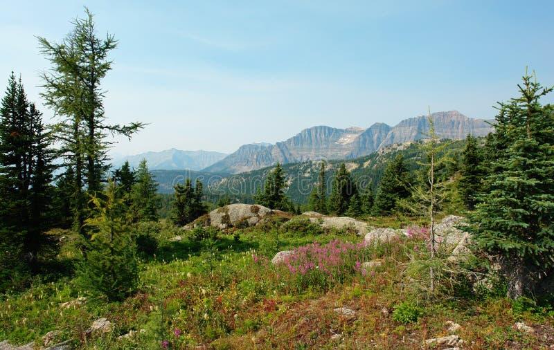 Foresta e prato alpini immagine stock libera da diritti