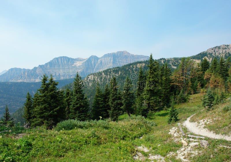 Foresta e prato alpini immagini stock