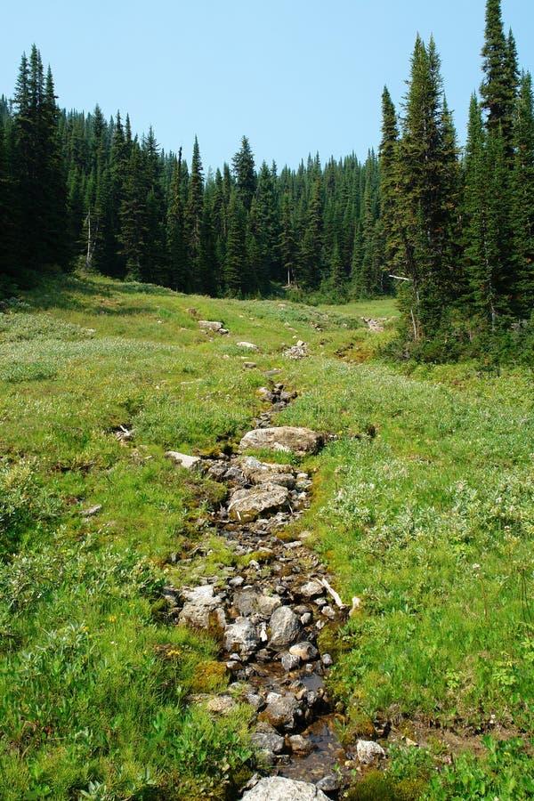 Foresta e prato alpini fotografia stock libera da diritti