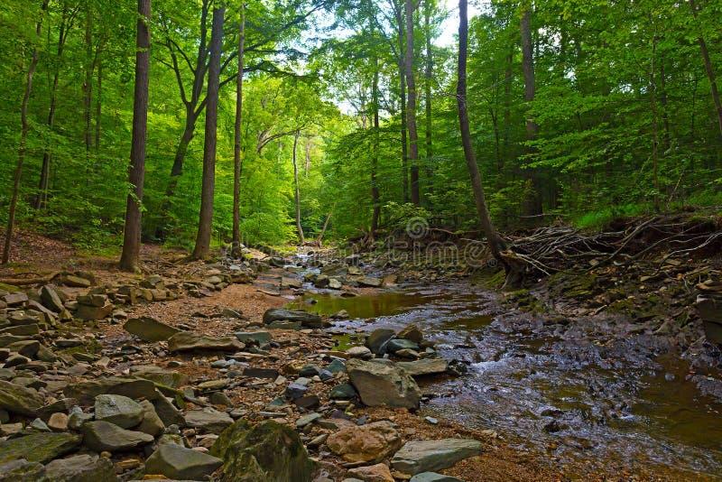 Foresta ed insenatura bassa un giorno soleggiato immagini stock libere da diritti