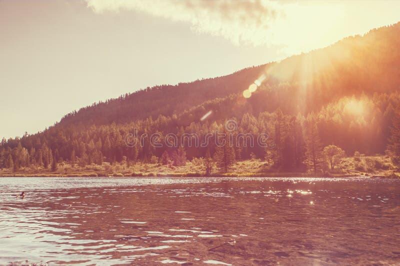 Foresta fantastica che emette luce dalla luce solare immagini stock libere da diritti