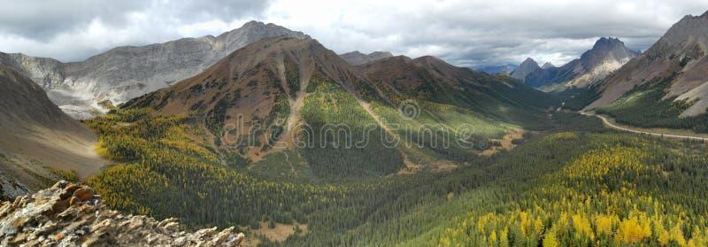 Foresta gialla dell'albero di larice nelle montagne immagine stock