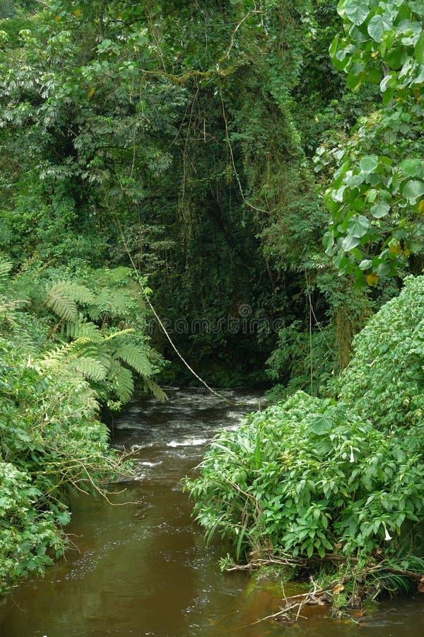 Foresta impenetrabile di Bwindi nell'Uganda fotografia stock