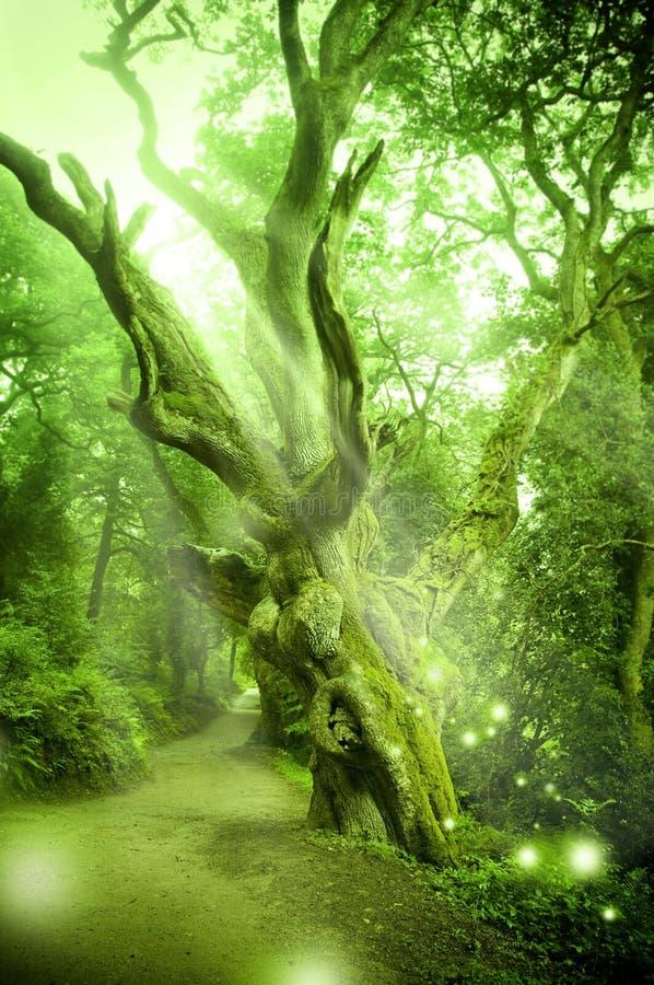 Foresta incantata fotografia stock libera da diritti