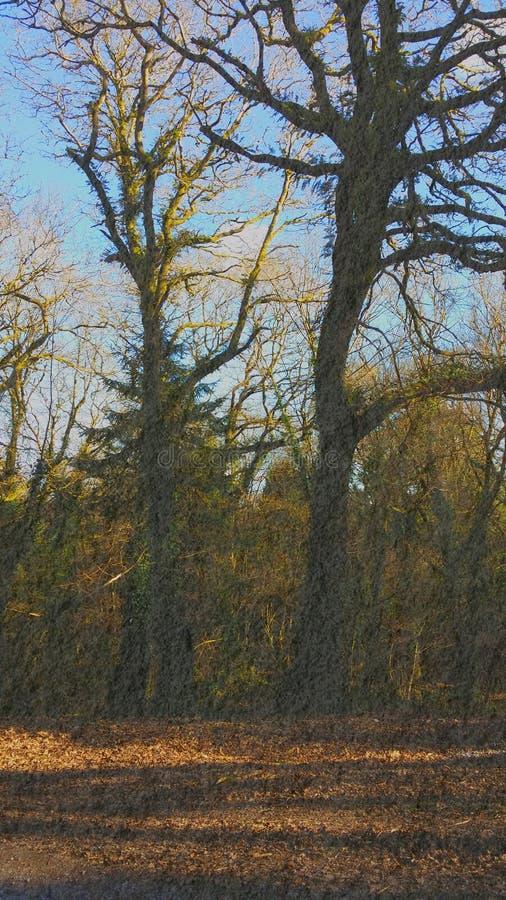 Foresta Irlanda immagine stock