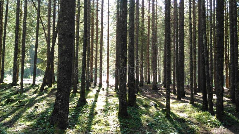 Foresta italiana fotografie stock