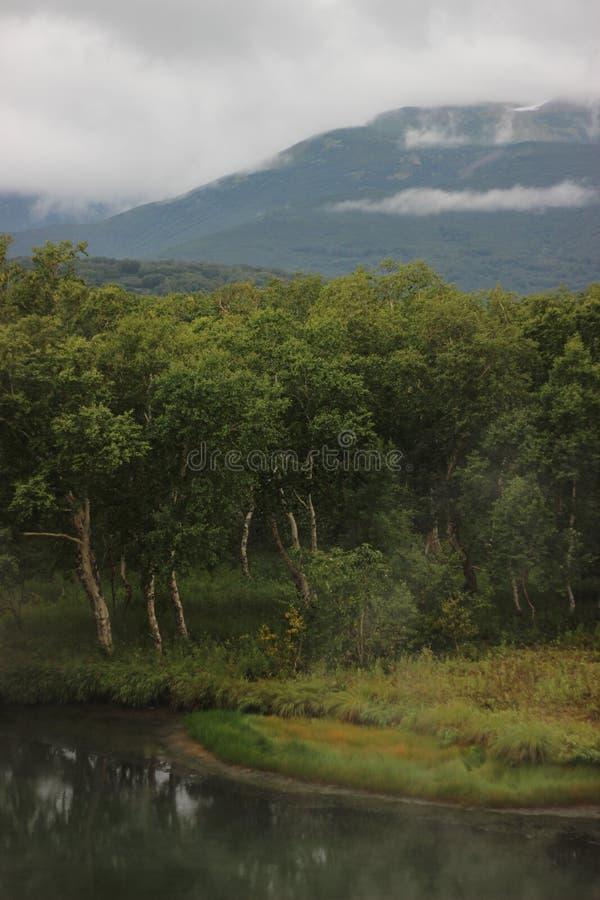 foresta kamchatka immagini stock