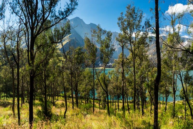 Foresta, lago e sommità del cratere immagini stock libere da diritti