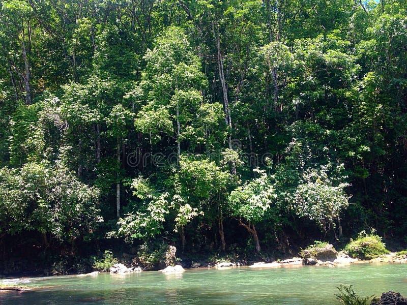 Foresta laterale del fiume fotografie stock